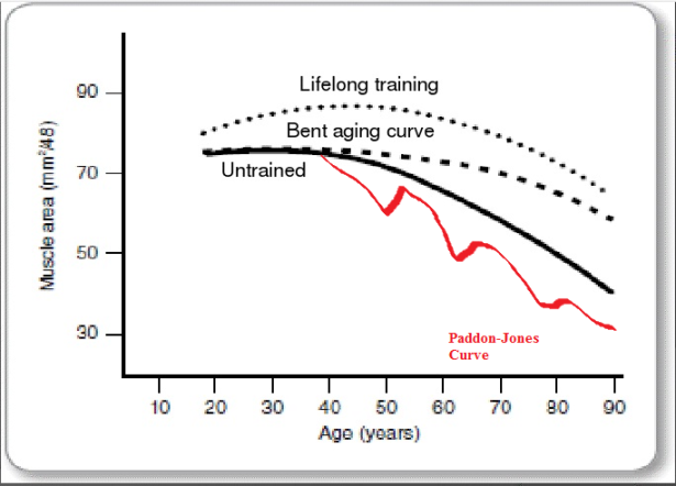 Muscle curve age